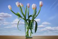 Семь белых тюльпанов