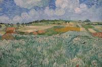 Field have Aviera