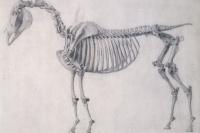 Джордж Стаббс. Первая анатомическая таблица скелета лошади