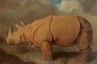 Джордж Стаббс. Носорог