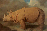 George Stubbs. Rhino