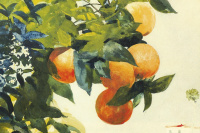 Winslow Homer. Oranges on a branch