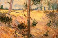 Винсент Ван Гог. Дерево в поле в солнечный день