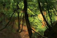 Густав Климт. В лесу