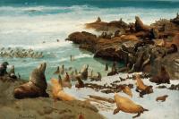 Альберт Бирштадт. Лежбище на прибрежных скалах. Фараллоновы острова, Калифорния