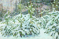 Pines under the snow
