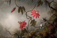 Passionflower (passionflower) and hummingbirds