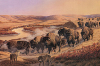 When the great herds roamed freely