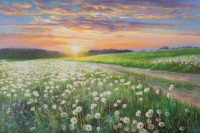 Sunset in dandelions