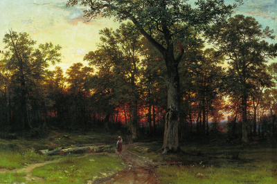 The forest in the evening