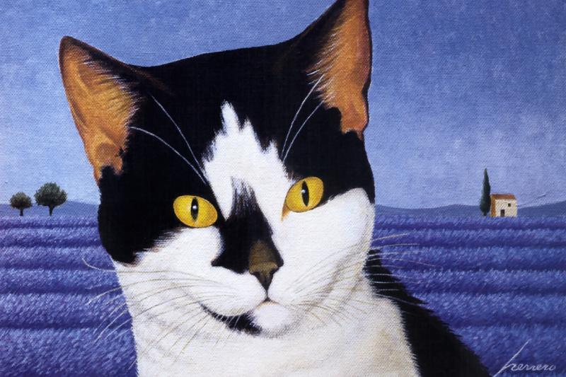 Lowell Herrero. Black and white cat