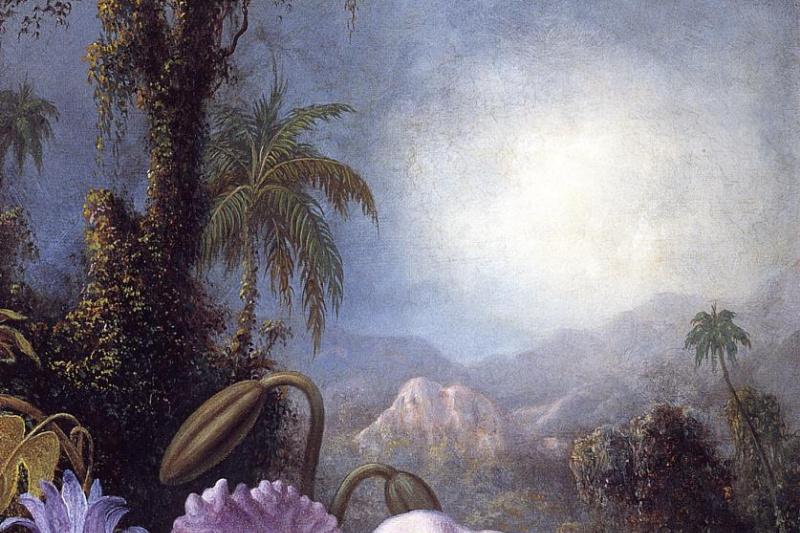Мартин Джонсон Хед. Цветущие орхидеи и пассифлоры и колибри