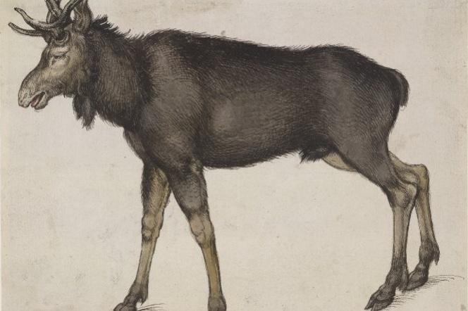 Albrecht Durer. Moose