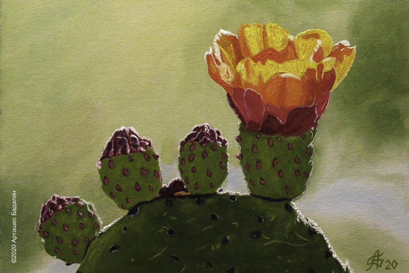 Artashes Vladimirovich Badalyan. Blooming cacti-3 - x-hardboard-m - 25x35