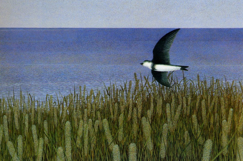 Alex Colville. One Seagull