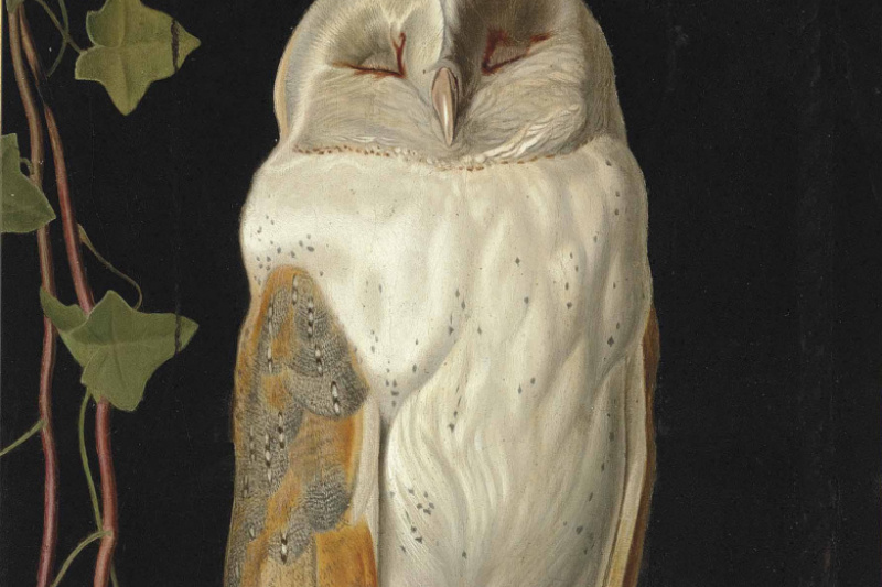 William James Webbe. Alone and warming his five wits, The white owl in the belfry sits