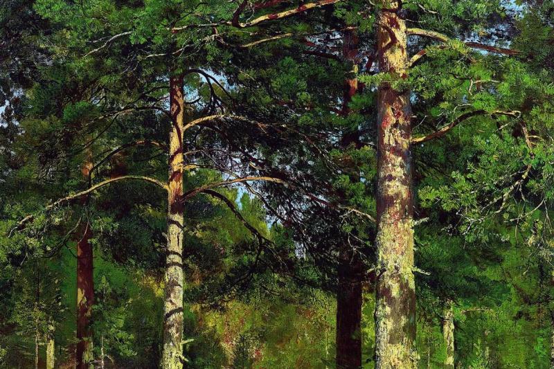 Ivan Ivanovich Shishkin. Pine trees illuminated by the sun