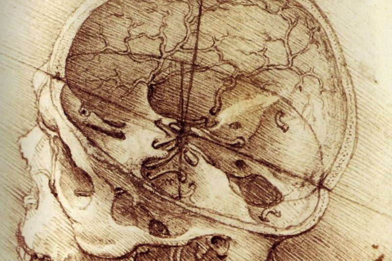 Леонардо да Винчи. Человеческий череп