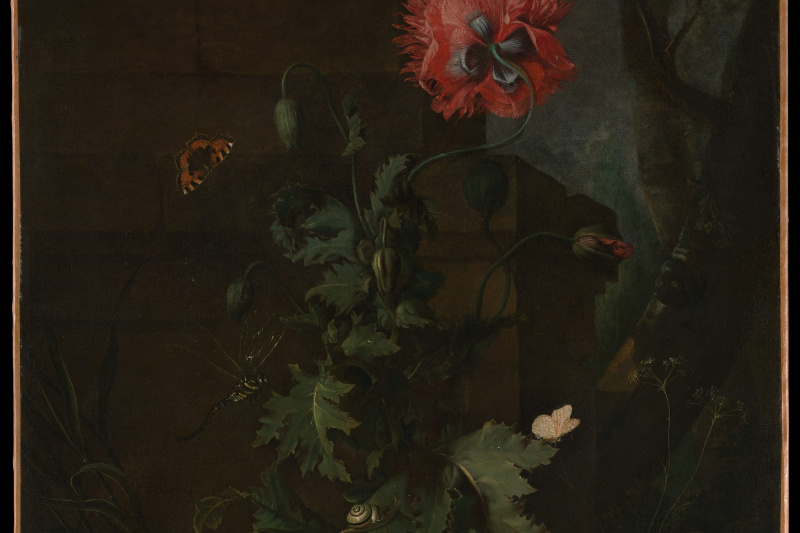 Otto Marceus van Scriec. Still life with poppy, insects, and reptiles