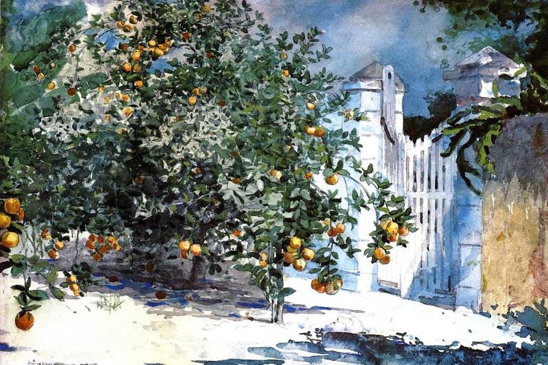 Winslow Homer. Orange tree, Nassau