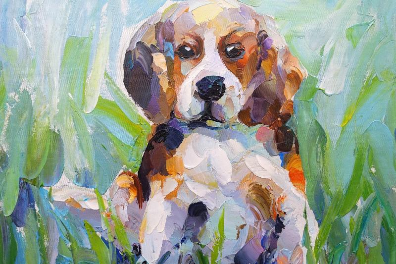Jose Rodriguez. Beagle Little hunter