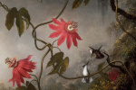 Passion flower and three hummingbirds. Fragment