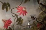 Страстоцвет и три колибри. Фрагмент