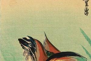 """Утагава Хиросигэ. Утка-мандаринка и хризантемы. Серия """"Птицы и цветы"""""""