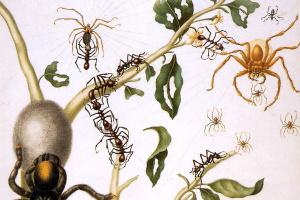Гуава с гигантскими крабовыми пауками, пауками-кругопрядами, зонтичными муравьями, тараканами, тарантулами и колибри. Суринам