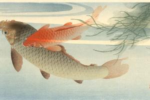 Охара Косон. Рыбы 5