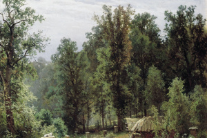 Apiary in a forest