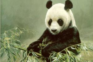 Терри Исаак. Панда