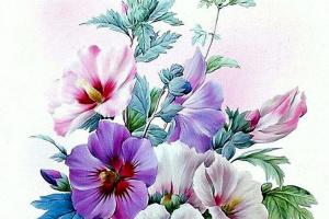 Bouquet: Rose of Sharon (Hibiscus Siriacus)