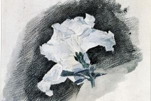 Михаил Александрович Врубель. Белая азалия без стебля