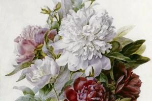 Букет: красные, розовые и белые пионы