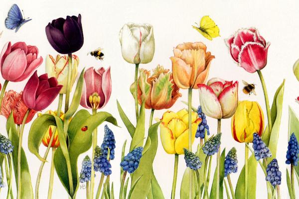 Марджолен Бастин. Разноцветные тюльпаны