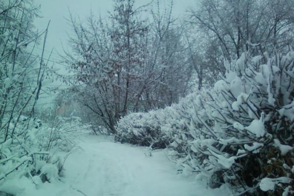 Женя Балашова. Зима