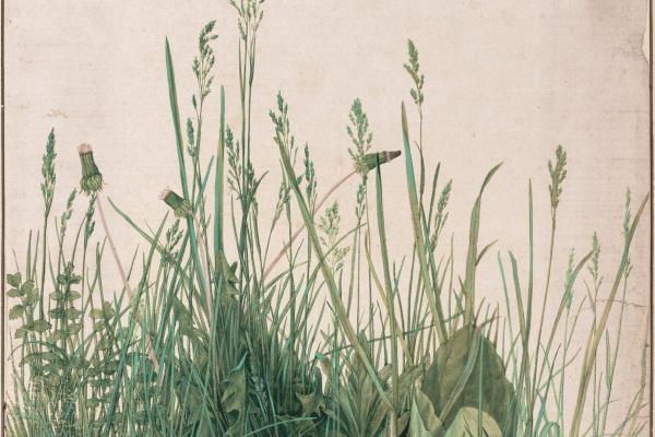 Альбрехт Дюрер. Трава (Большой кусок дерна)