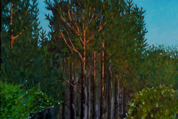 Eugene Kuznetsov. Pines. Shakhtinsk.