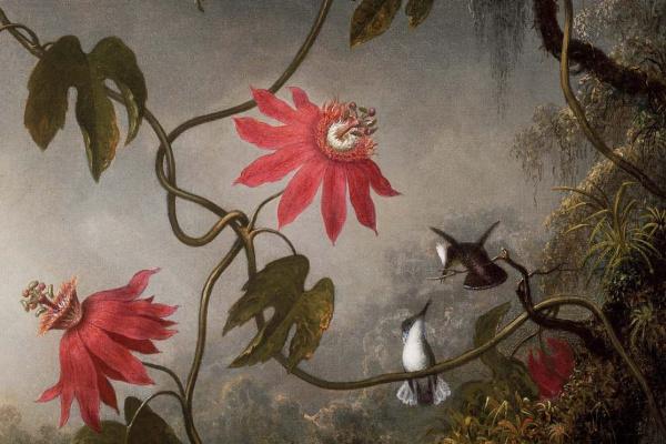 Martin Johnson Head. Passion flower and three hummingbirds. Fragment