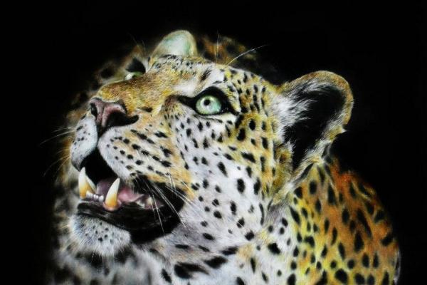 Алексей. Леопард
