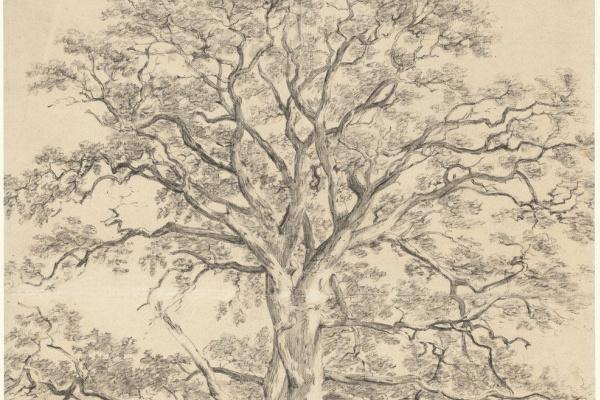 Джон Констебл. Большой дуб