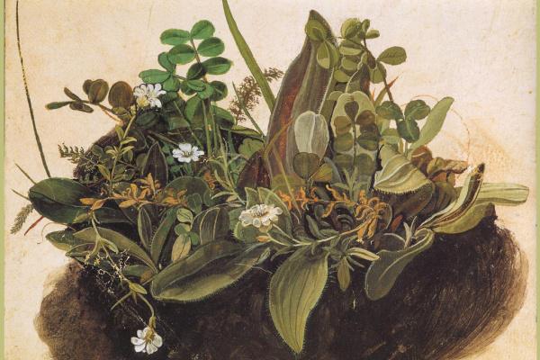 Albrecht Durer. Grass