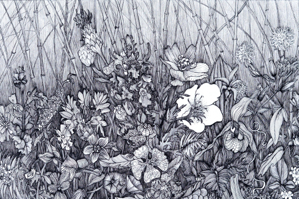 Марианна Маслова. Крымские травы №3