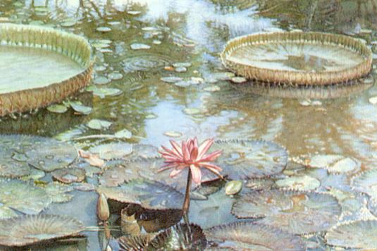 Стив Хэнкс. Цветущие водяные лилии