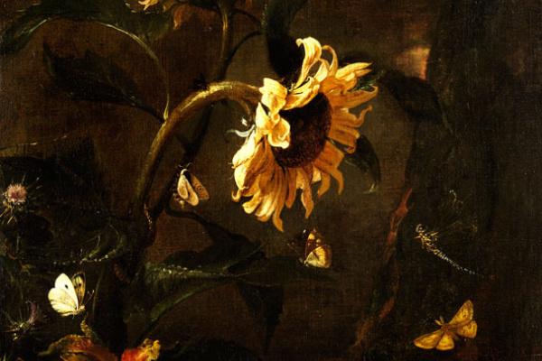 Отто Марсеус ван Шрик. Натюрморт с подсолнухом, змеей  и насекомыми