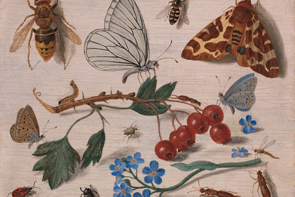 Jan van Kessel Elder. Insects with Common Hawthorn and Forget-Me-Not