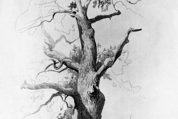 Fedor Alexandrovich Vasilyev. The trunk of an old oak. Sketch