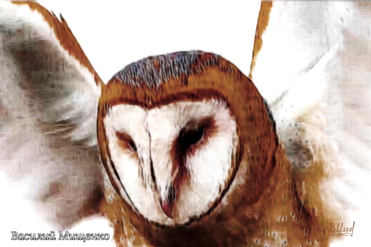 Vasiliy Mishchenko. Owl barn owl