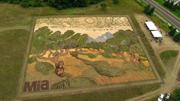 Реплика картины Ван Гога «Оливковые деревья под жёлтым небом иноябрьским солнцем», которую осенью 2